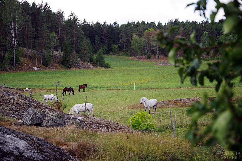 Nora gård på Värmdö - www.aliciasivert.se // värmdötips gårdsbutik loppis café fik fika natur idyll skärgården skärgård att göra i på utflykt utflytksmål besöka besök häst hästar