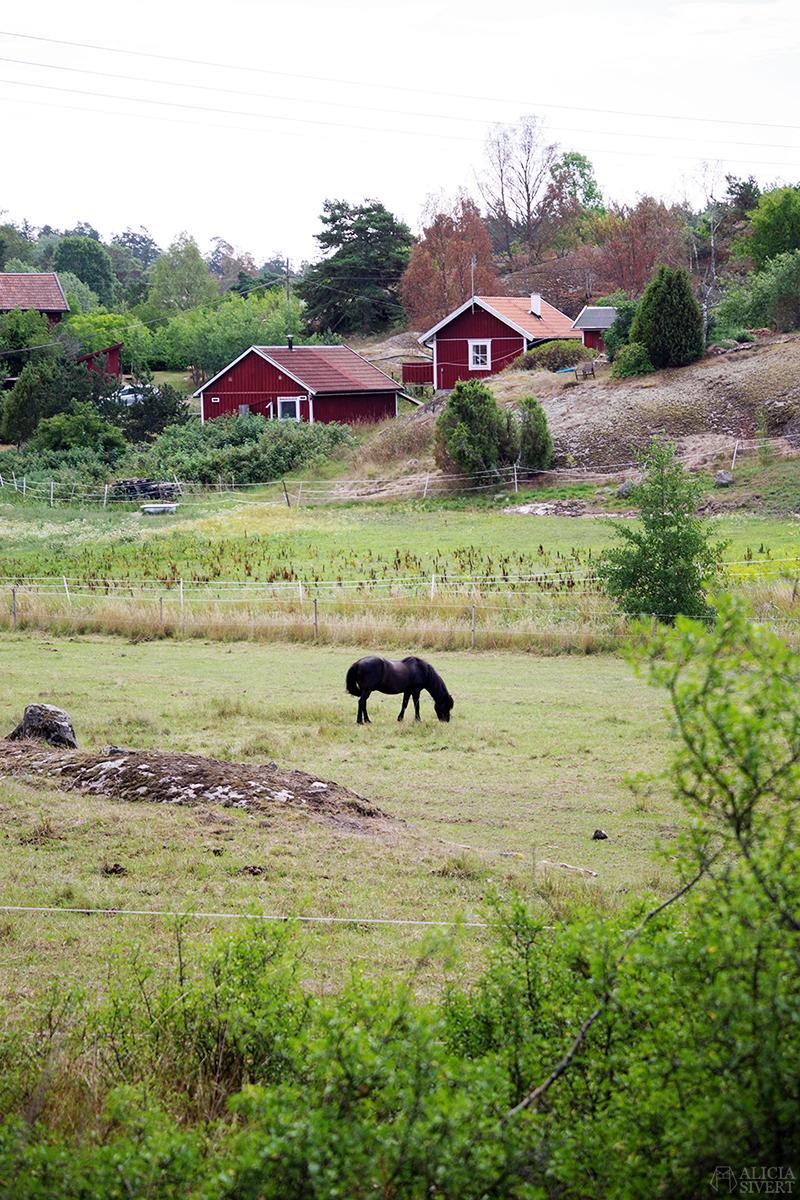 Nora gård på Värmdö - www.aliciasivert.se // värmdötips gårdsbutik loppis café fik fika natur idyll skärgården skärgård att göra i på utflykt utflytksmål besöka besök islandshäst röda stugor hus
