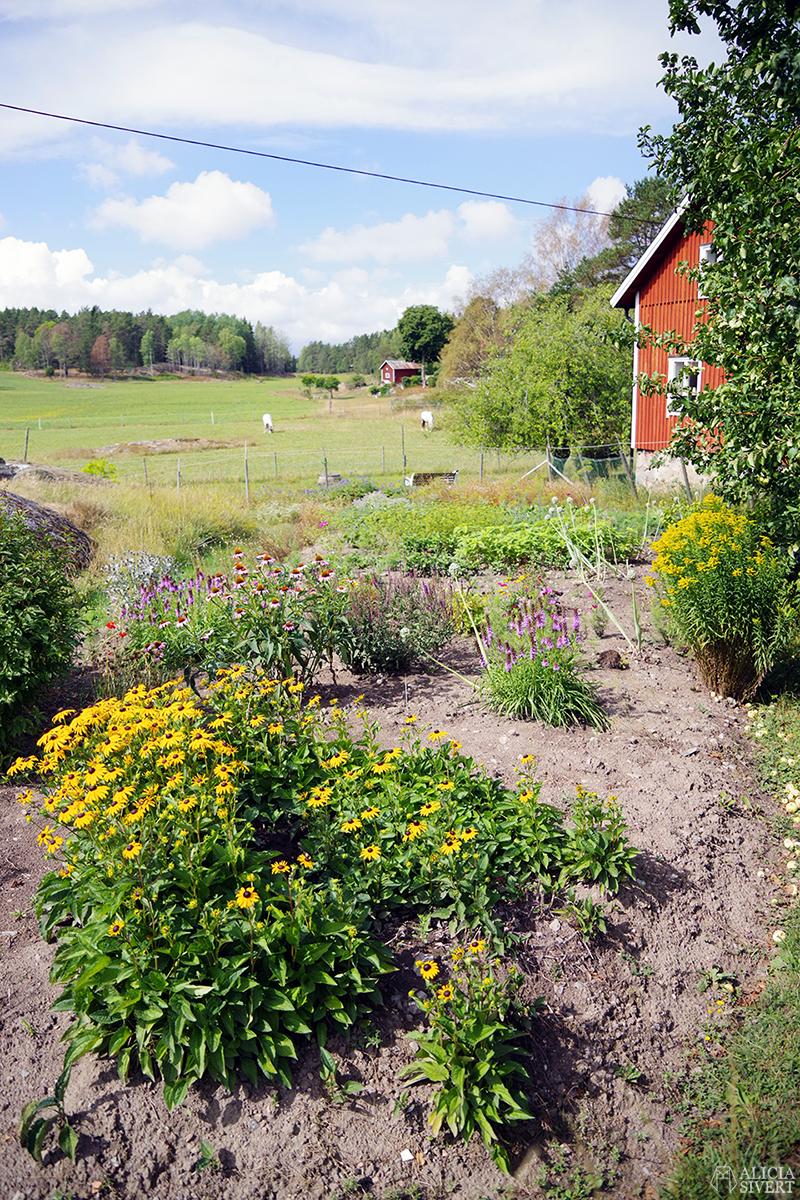 Nora gård på Värmdö - www.aliciasivert.se // värmdötips gårdsbutik loppis café fik fika natur idyll skärgården skärgård att göra i på utflykt utflytksmål besöka besök trädgård odling