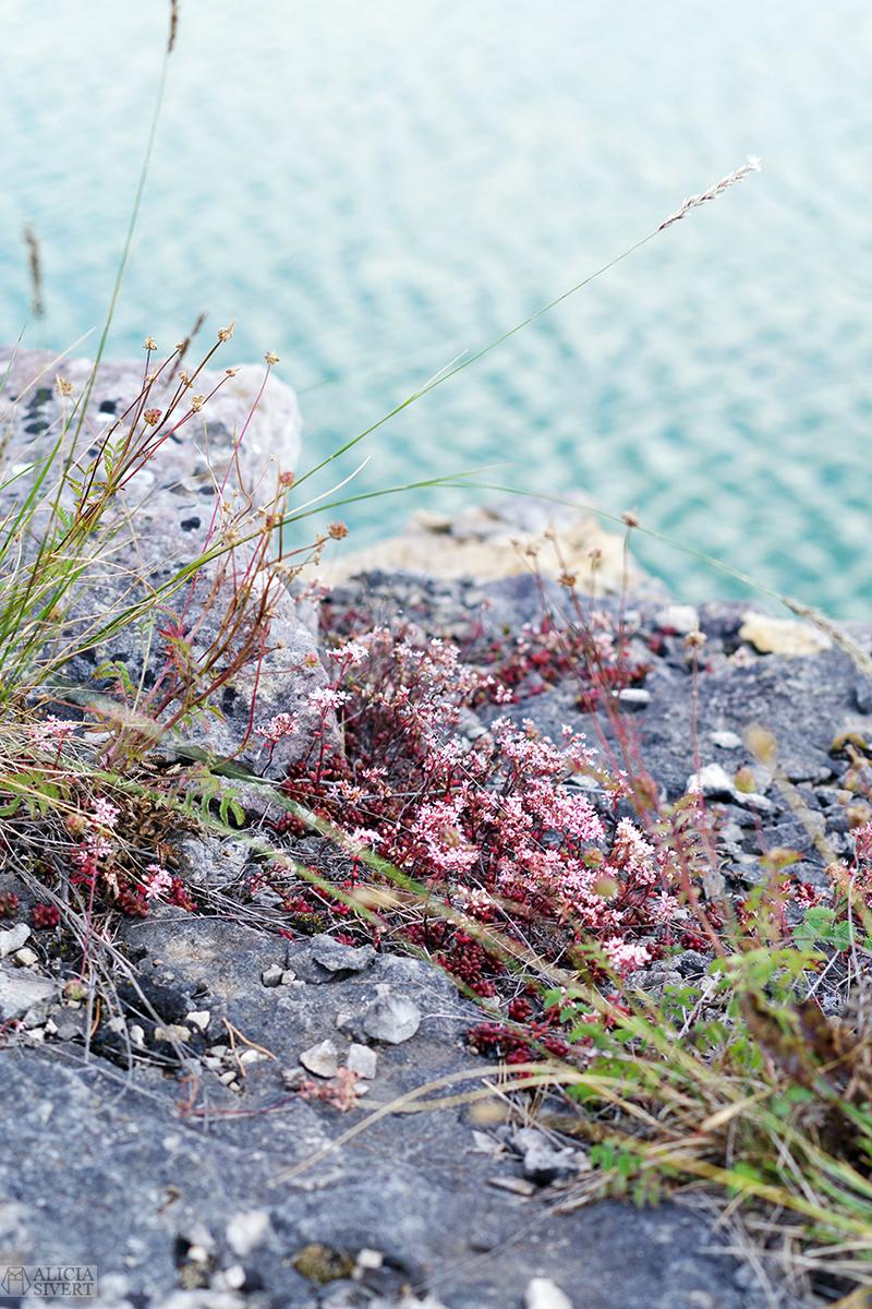 Gotland natur - www.aliciasivert.se