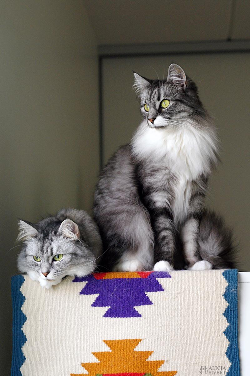 katterna Tofslan och Vifslan - www.aliciasivert.se