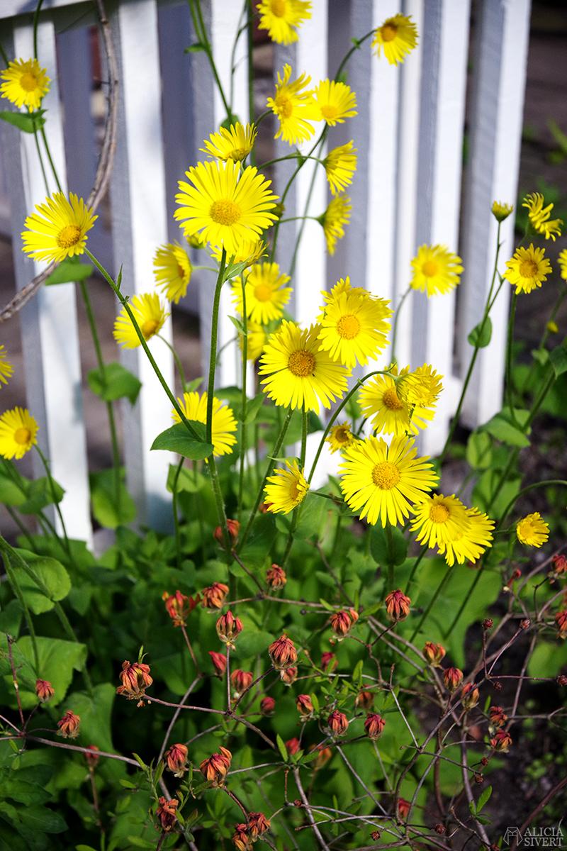 Nya lägenheten - www.aliciasivert.se // gula blommor