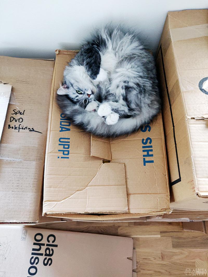 Katt på flyttlåda - www.aliciasivert.se
