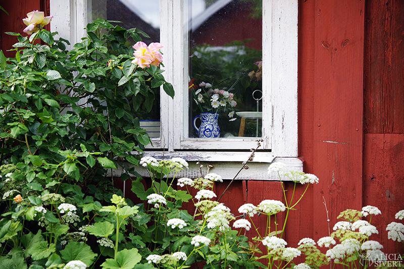 Blå kanna i fönster, en sommardag på Sandön - www.aliciasivert.se