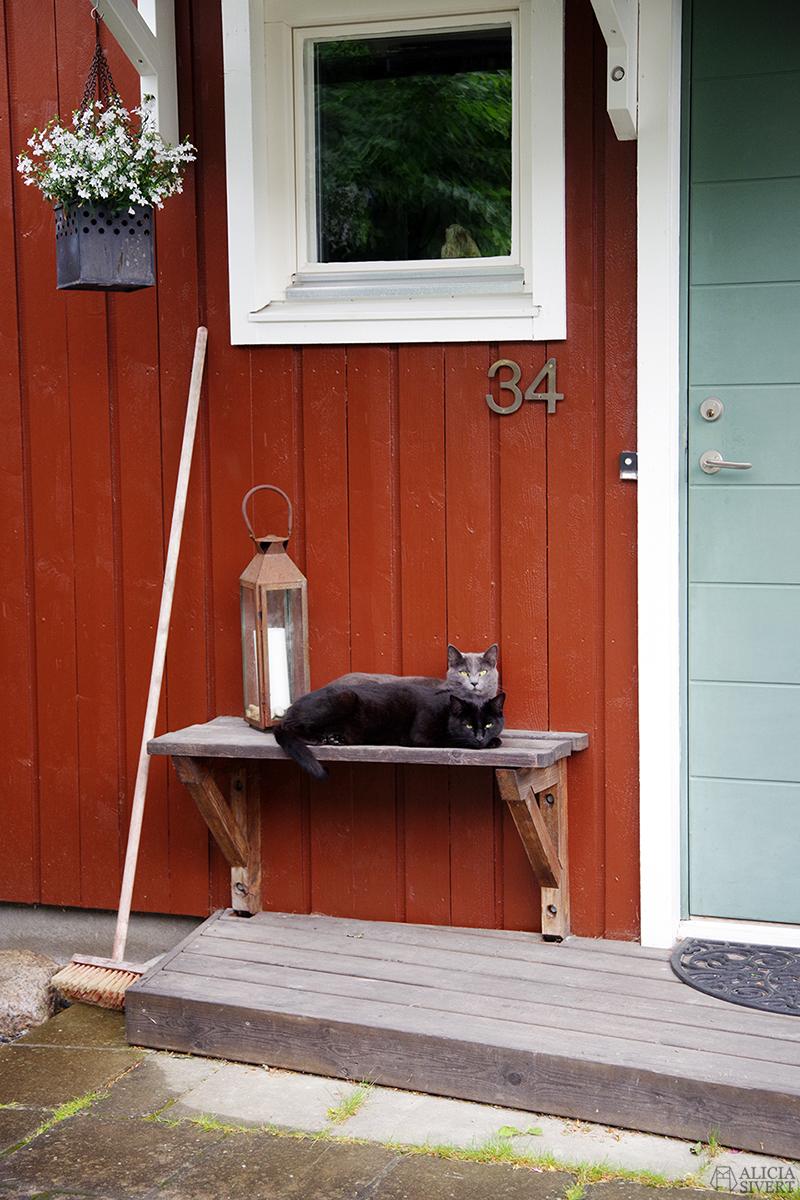Klappa grannkatter, två katter på en bänk - www.aliciasivert.se / sommarplaner