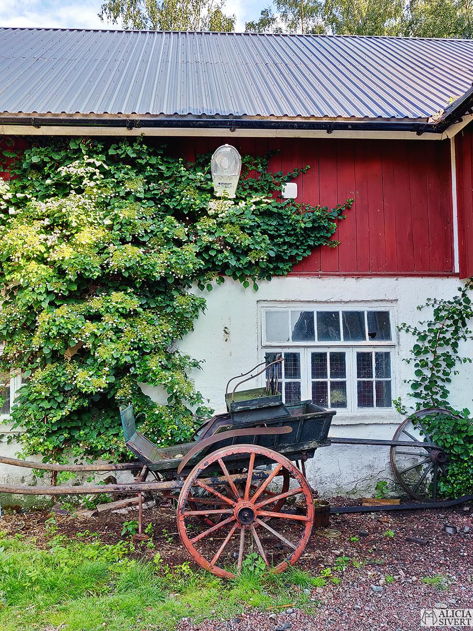 Vagn mot ladugård, Norrängens alpackagård - www.aliciasivert.se