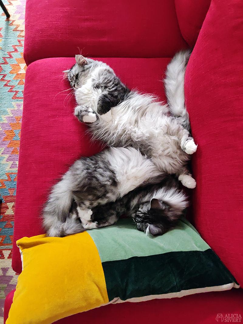Sammetskuddar inspirerade av Finn Juhl, av Alicia Sivertsson - www.aliciasivert.se // sy egna kuddar kudde sömnad sammet sammetskudde diy soffkudde soffkuddar nackkudde nackkuddar soffa hem inredning katt katter tofslan och vifslan