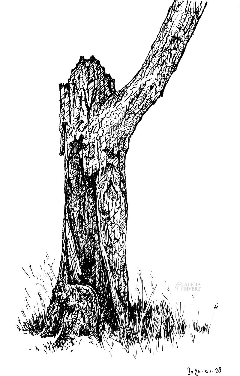 Tio tecknade träd till tröst - www.aliciasivert.se // teckning trädteckning teckningar döda träd gamla ihåliga knotiga illustration bläck tusch svartvit svartvitt staedtler mars matic 0,4 rita skissa alicia sivertsson