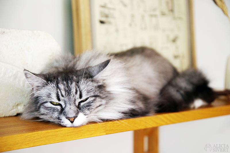 Katten Vifslan på hylla i massiv ek med konsoler, loppisfynd - www.aliciasivert.se // loppis fynd trähylla reglerbar höj- och sänkbar katt