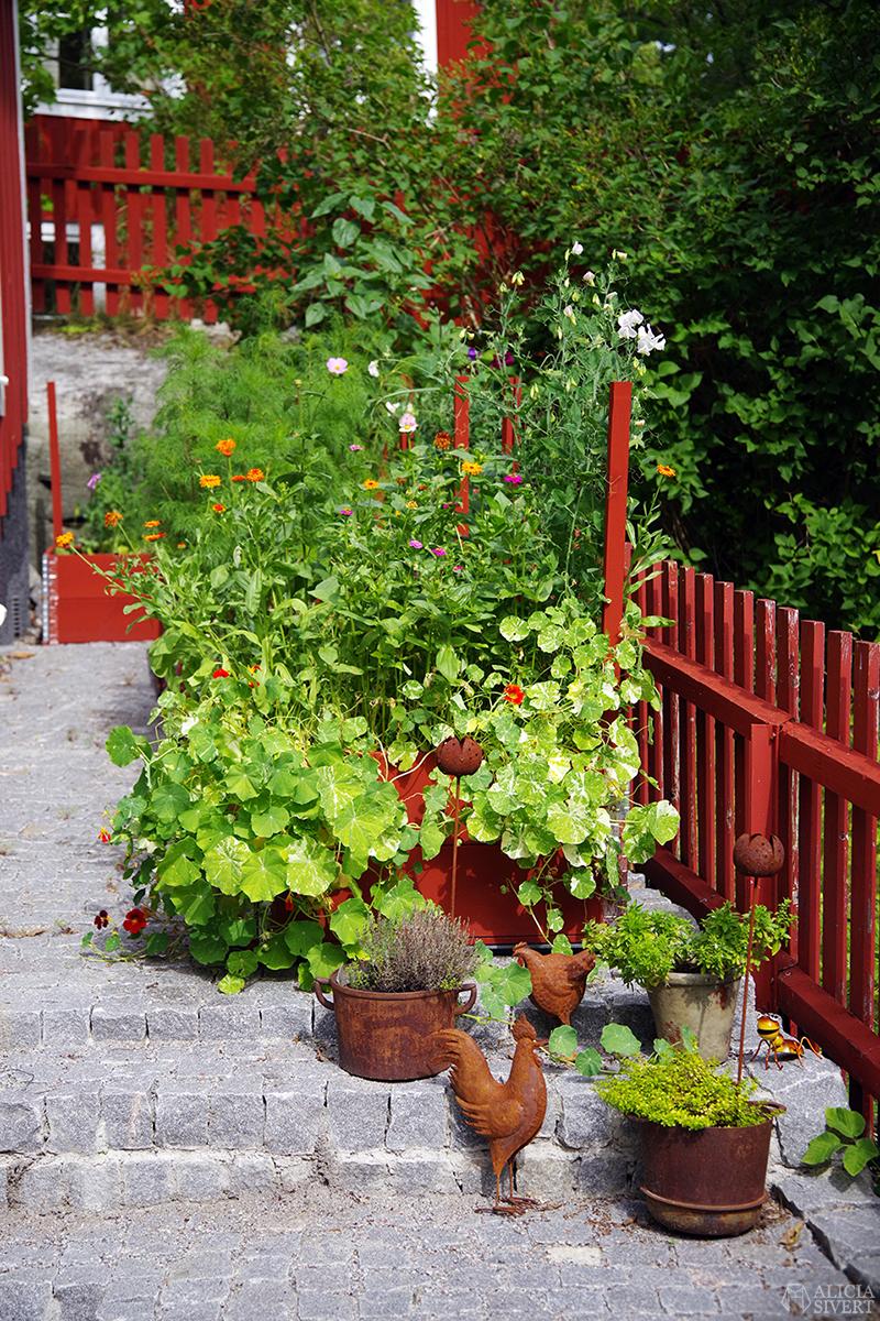 Vaxholm, foto av Alicia Sivertsson - www.aliciasivert.se // trädgård inspiration trädgårdsinspiration krasse luktärt