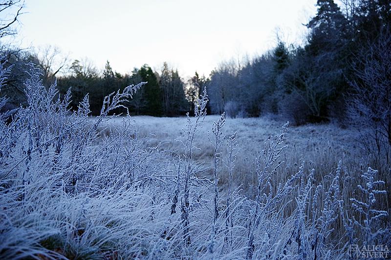 En frostig julafton - www.aliciasivert.se