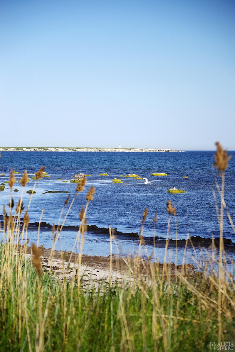 Ön Heligholm med vass och måsfåglar i förgrunden. Gotland i juni - www.aliciasivert.se