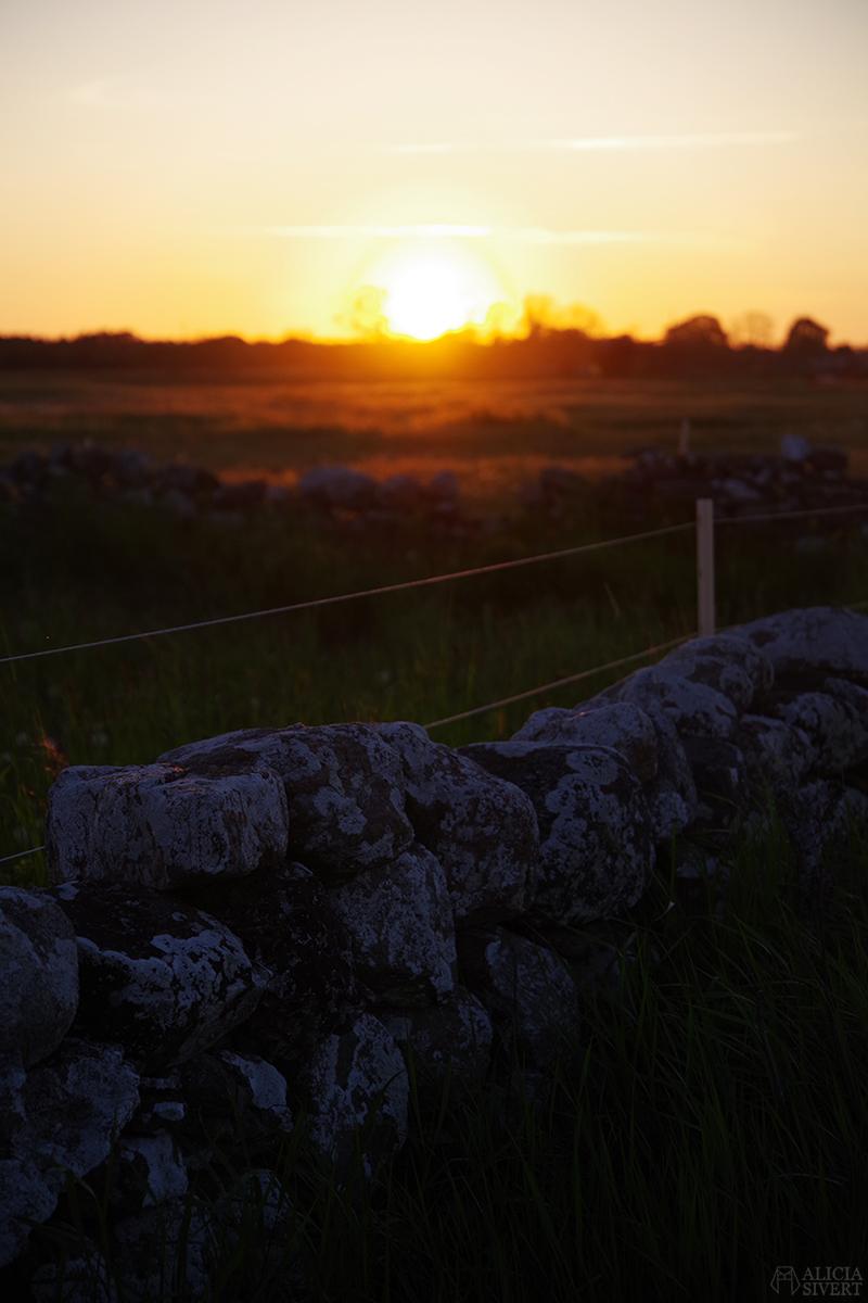 Solen går ner bakom gotländsk stenvast. Gotland i juni - www.aliciasivert.se