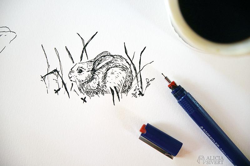 Tuschteckning av kaninunge - www.aliciasivert.se // kanin teckning