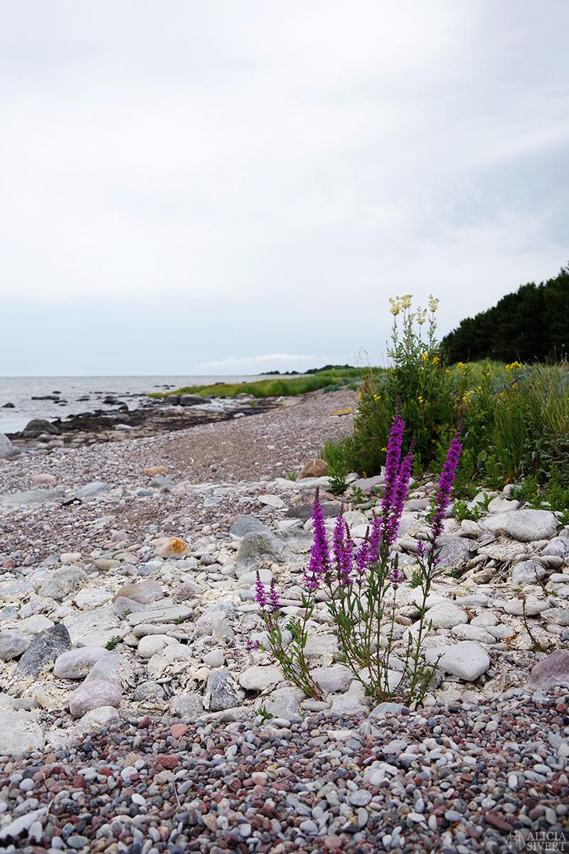 Stenstrand Gotland aliciasivert.se