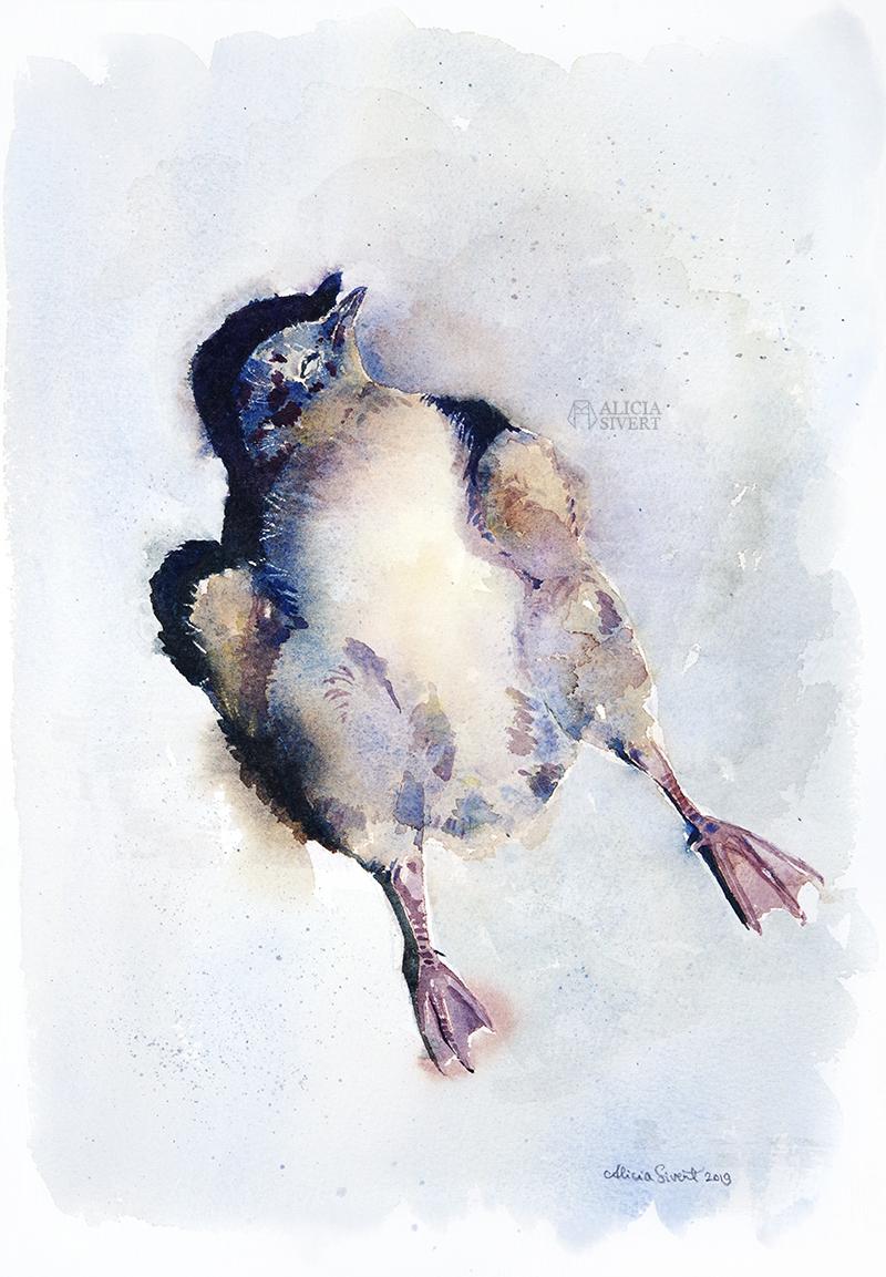 Första flygturen, akvarell av en död måsunge av Alicia Sivertsson 2019 - www.aliciasivert.se